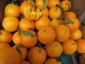 oranges Katinkas Kitchen